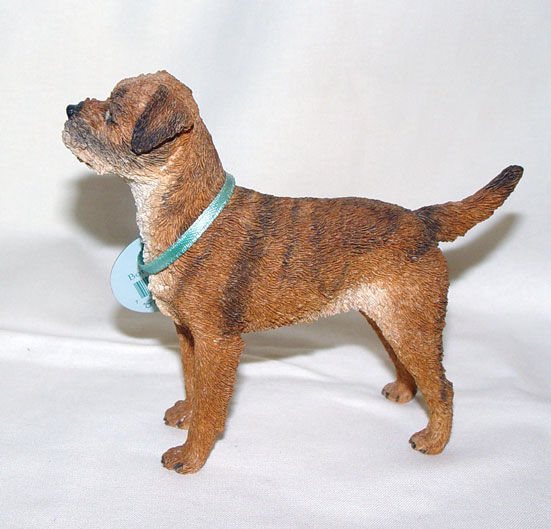 Image de Border Terrier