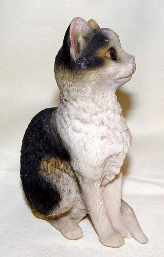 Image de Cat