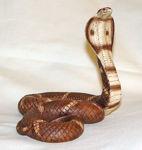 Image de Cobra snake