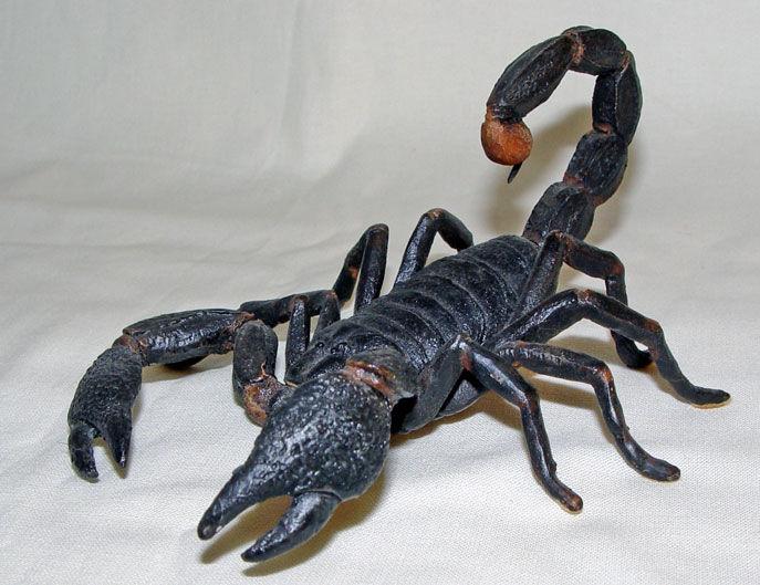 Image de Scorpion