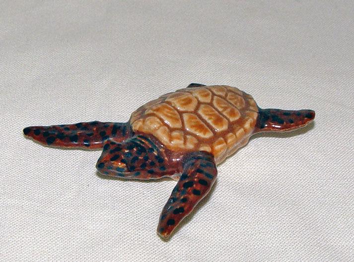 Image de Sea Turtle