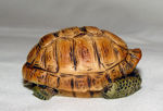 Image de Turtle in shell